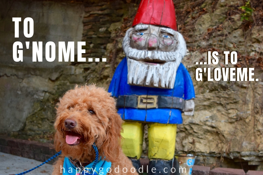 cute dog meme and dog with a gnome picture