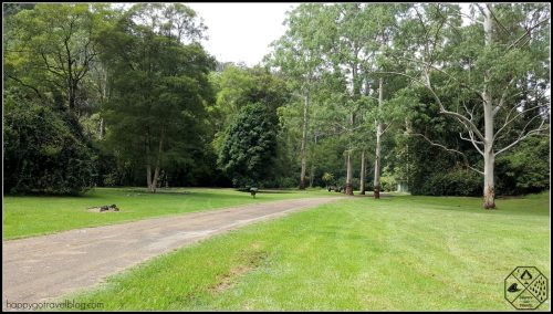 Chichester state forest camping areas - Telegherry River - Coachwood camping area