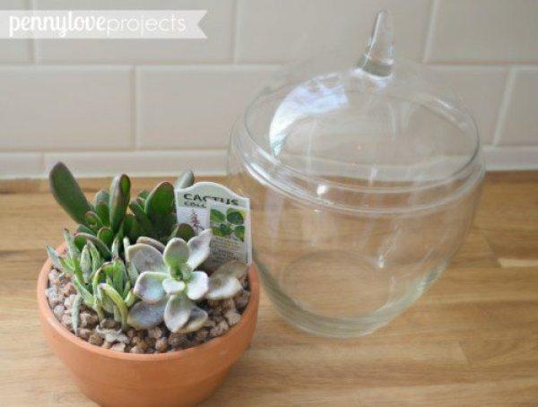 gift ideas DIY-Succulent-Terrarium1-661x500