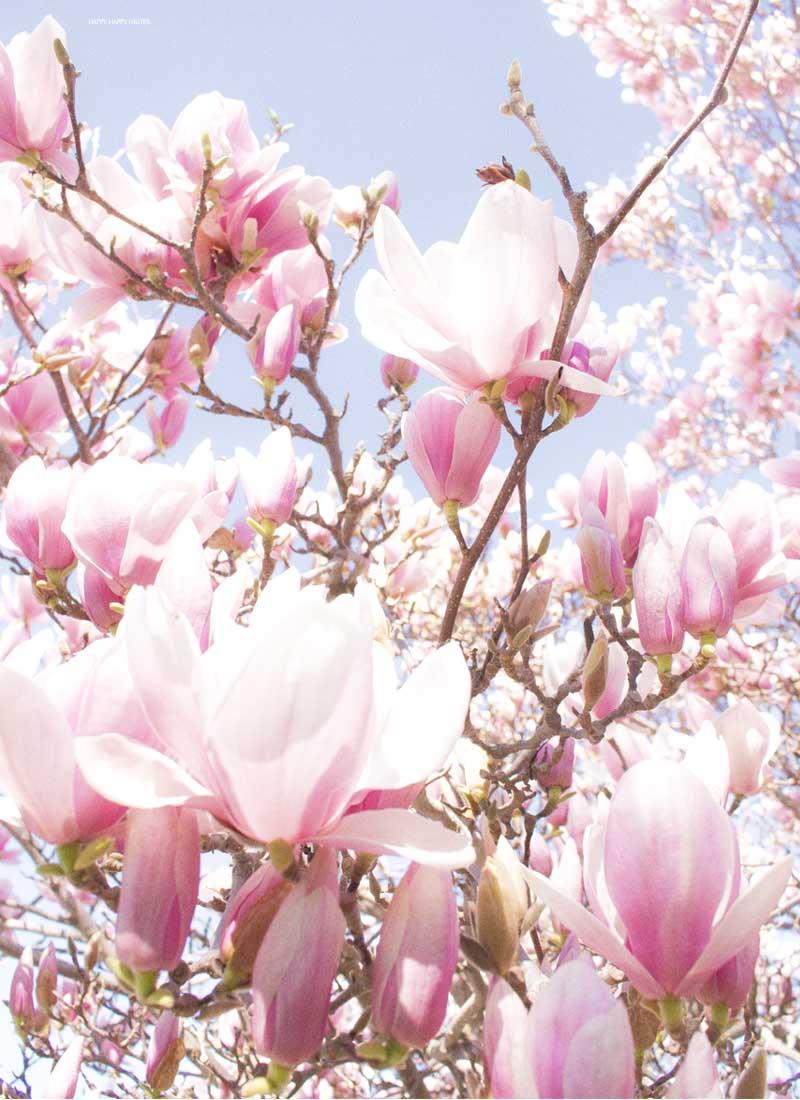 Paper Flower Tutorial: Magnolia Flowers - Happy Happy Nester