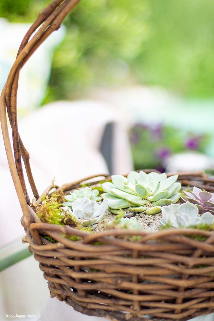 Check out my Container Gardening Ideas for your summer planning. It's not too late to get your flower pots started for summer. I have shade planter, succulents, deer resistant ideas. #gardening #flowers #garden