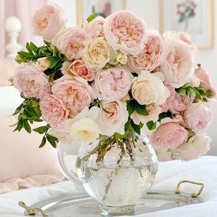 Evelyn David Austin roses