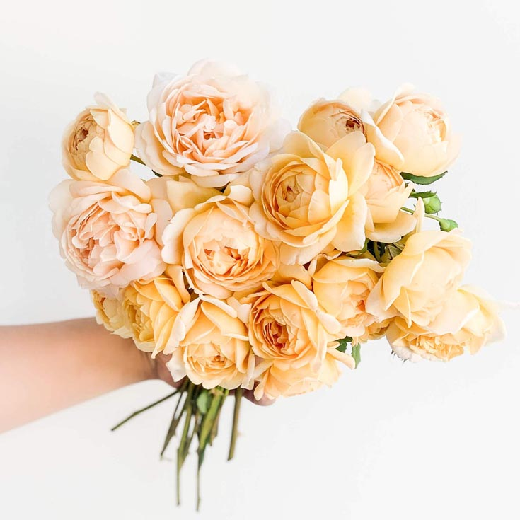 David Austin cut roses are divine