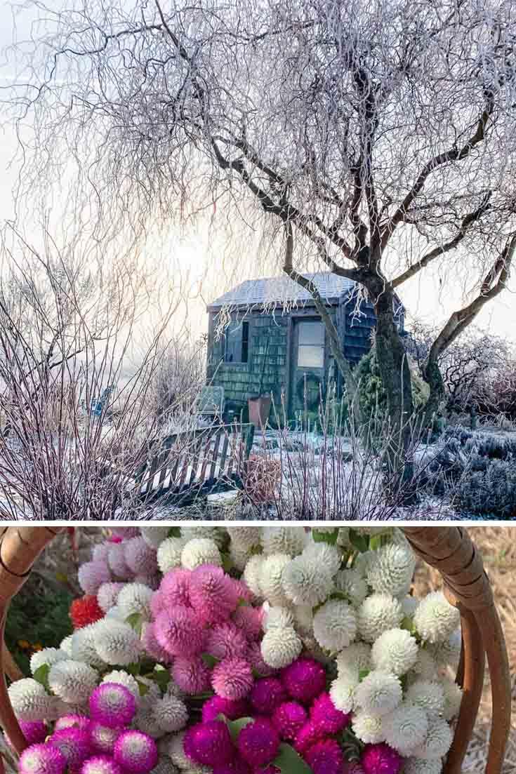 online garden shop