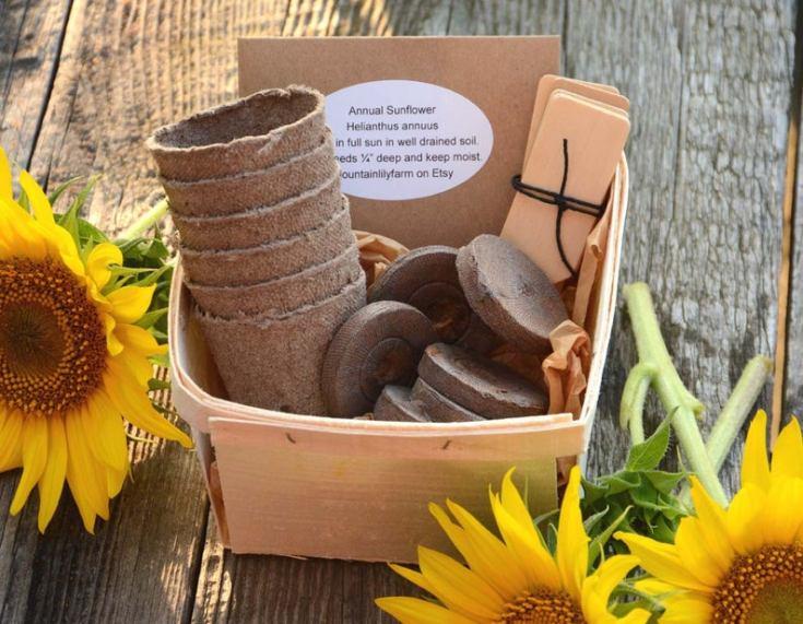 sunflower seed starter kits