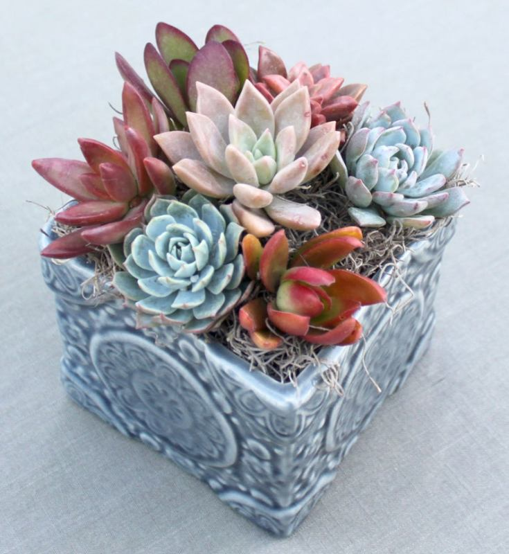 beautiful and healthy succulents
