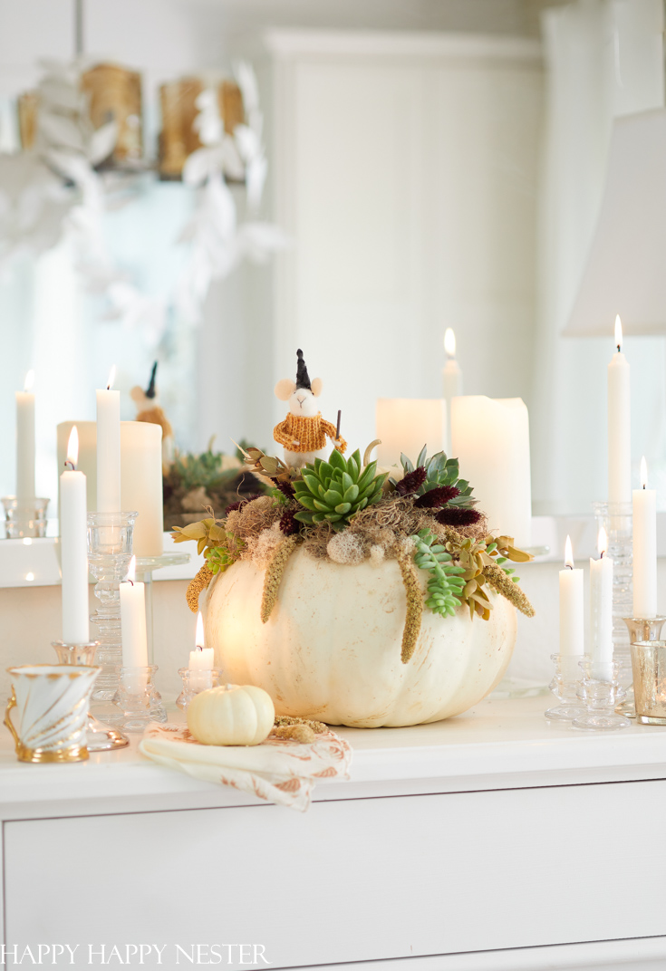 diy pumpkin succulent planter
