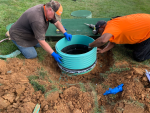 What to Do When Tree Roots Grow into a Septic Tank and Repairing Broken Risers
