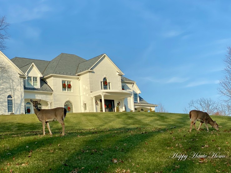 Reindeer on lawn-2