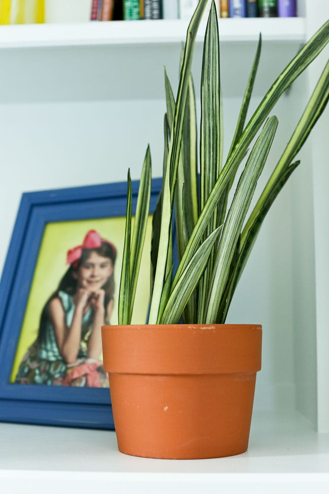 spider plant use household plants to reduce the indoor air pollution in your home