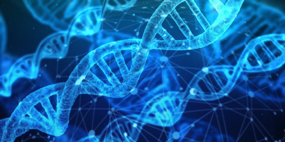 DNA- Causes of Lower Belly Fat