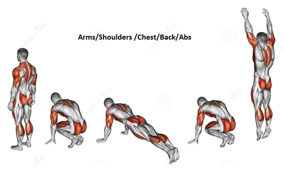 What Muscles Does The Burpees Exercise Work - Highlighted Muscles