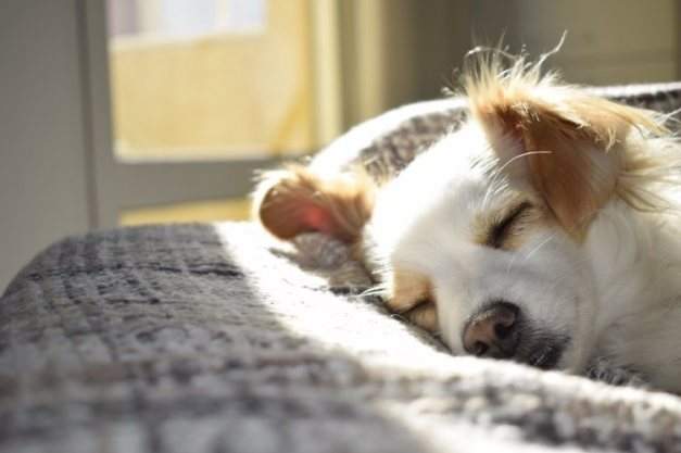 Puppy Napping