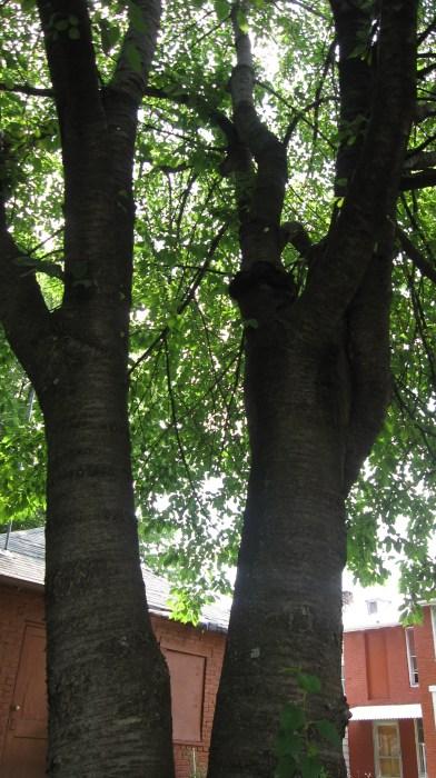 3 trees actually