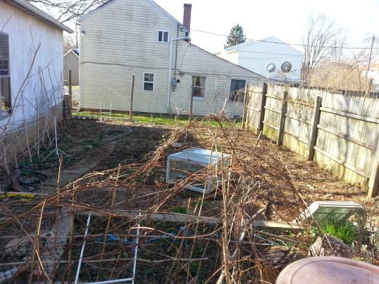The ugly winter garden