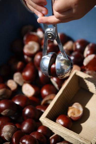 fine motor chestnut activity for preschoolers