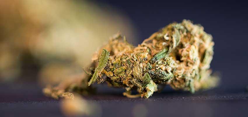 10 Cannabis Strains Medical Use