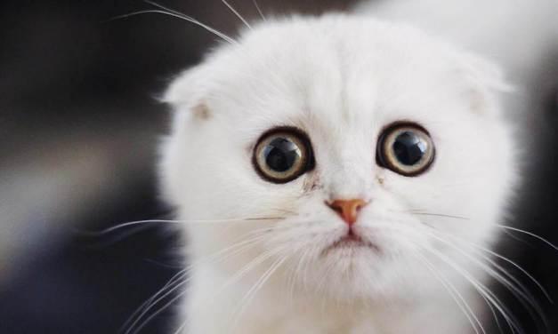 Tato kočka je neustále v rozpacích a nikdo nedokáže vysvětlit proč