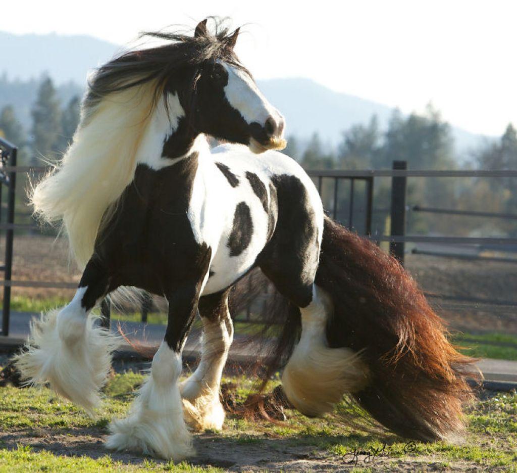 koně s knírem