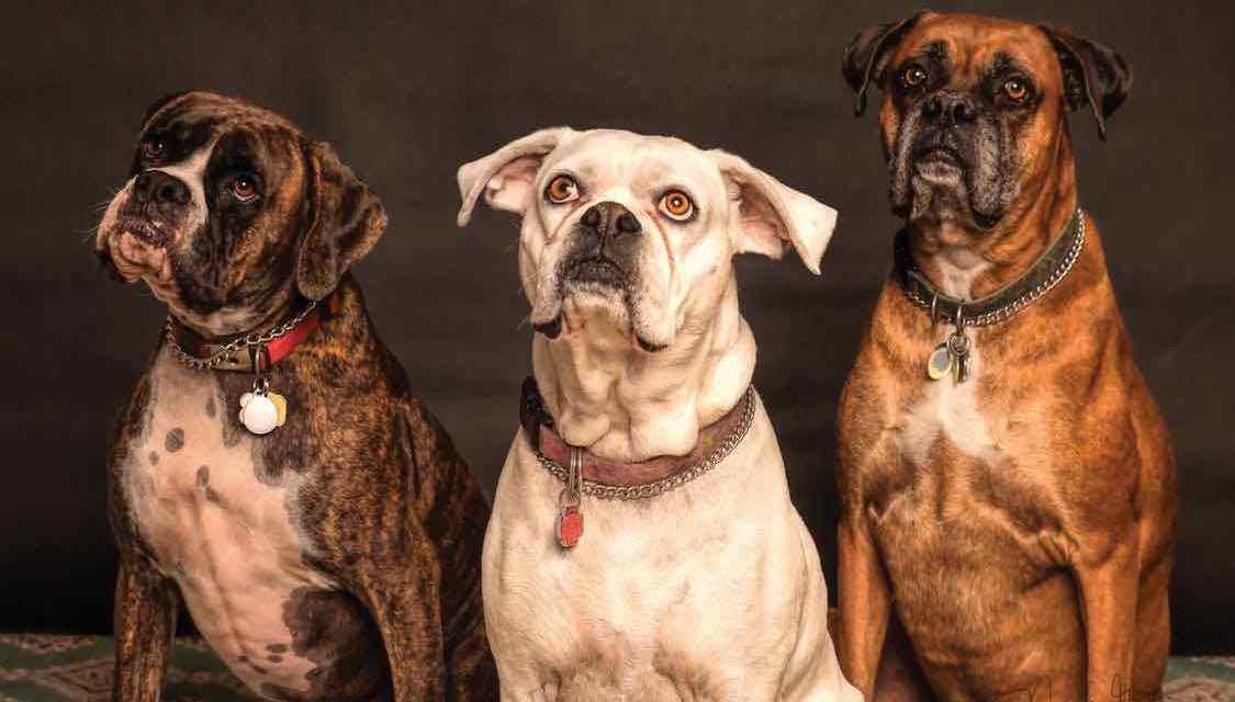 Hrdina zachránil psy během hurikánu Florence