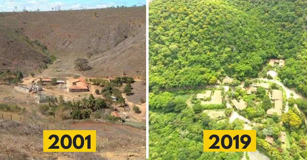 Za necelých 20 let vzkřísili zničený prales. Podívejte se na výsledek!