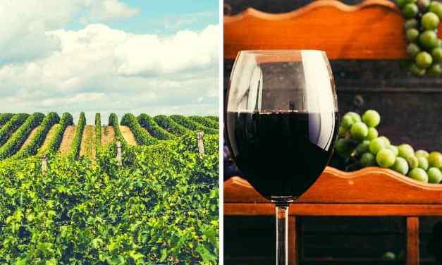 Kvíz: jen 10 % lidí uhodne všech 10 vinic a vinařství