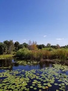 Free Things to Do in Naples Flordia - Freedom Park