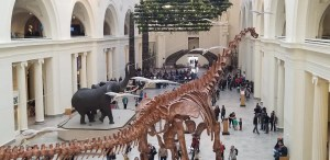 What to know before you go to Chicago Field Museum of Natural History. Things to Do with the kids and tips on exhibitions, where to eat, where to park and more. Read this and be ready for a fun Family day at the Museum. #familytravel, #familyvacation, #traveltips, #Chicago, #fieldmuseum