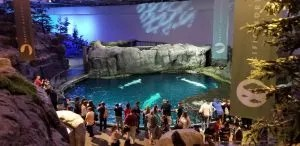 Tips for a Day at the Chicago Shedd Aquarium with Kids. Things to do, tickets, where to eat, parking, and free days. Families will love visiting Dolphins, Beluga Whales, Penguins and fish. #sheddaquarium, #chicagoattractions, #traveltips,