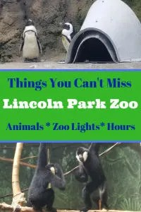 Free Things to do at Lincoln Park Zoo Chicago. This Illinois Zoo offers tons of animals to view and is easy to navigate. Bonus the zoo is free! Your kids will love the Christmas holidays lights event and Halloween event too. #Lincolnparkzoo, #chicagoattractions