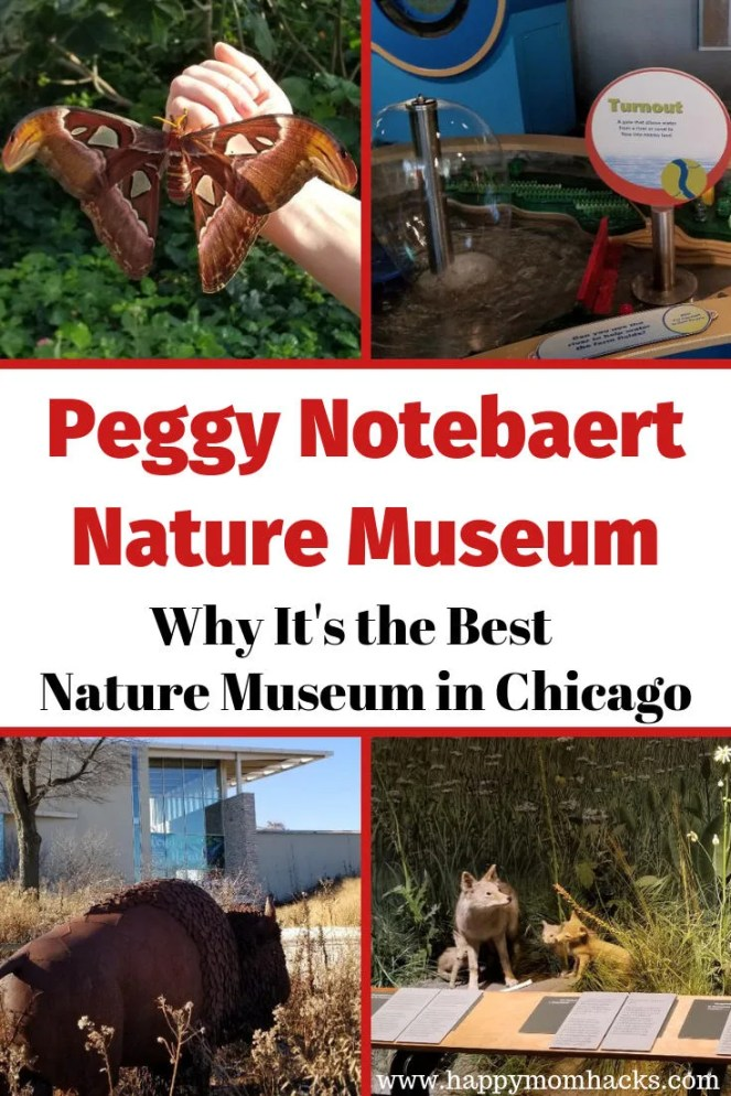Best Nature Museum in Chicago for Kids. Peggy Notebaert Nature Museum is filled with beautiful buterflies, nature trails, reptiles & play areas. Click through to get all the tips you need for your first visit including parking, where to eat and things to do. #notebaert, #chicago, #naturemuseum, #familytravel, #traveltips