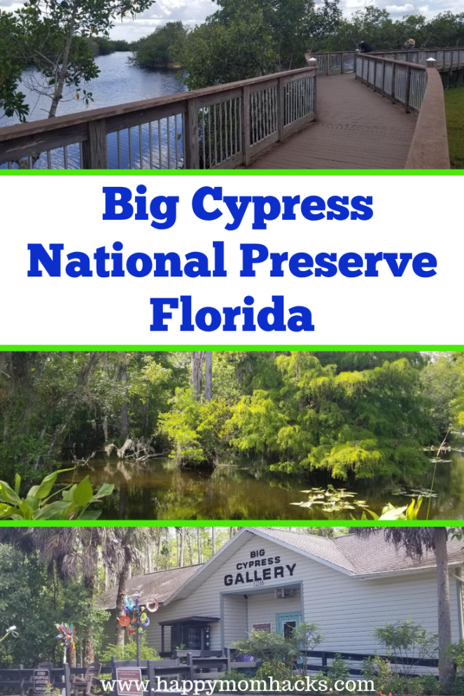 Guide to Florida's Big Cypress National Preserve. Where to see Alligators & birds in the park. Plus best visitor center and boardwalks to hike and a Gallery.  Spend a fun family day with the kids exploring the park. Plus side trips to Naples and Marco Island. #bigcypressnp #florida #familytravel #traveltips