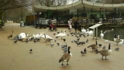 Londres - Hyde Park6