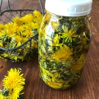 How to Make a Dandelion Vinegar Infusion
