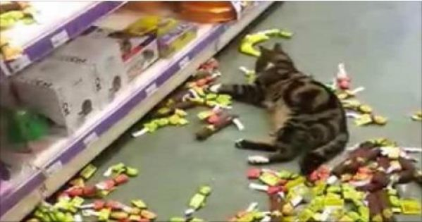 Lost Tabby Found At Nearby Store Helping Himself to Catnip Products!
