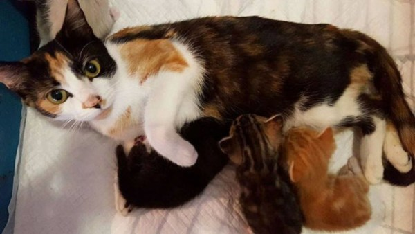 Paralyzed Cat Drags Herself To Spot She Left Kittens After Neighbor Unsuccessfully Tries To Kill Her