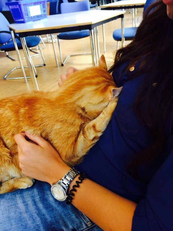 Cat Comes to University Every Day So She Can Rescue Students with Cuddles