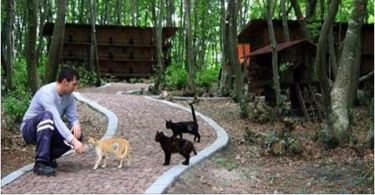 "A Small ""Town"" Built … Just for Homeless Cats!"