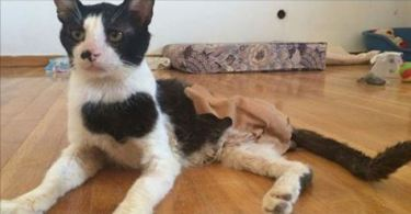 Frog The Cat Was Dragging His Dead Leg Before Kind People Found Him