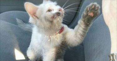 Kitten Found Walking The Street Needed Many Baths Just To See Her True Fur Color