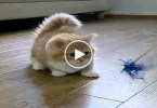 Watch This Cute Confused Kitten. So ADORABLE...