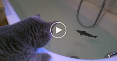 Brave Cute Cat Against SHARK (toy).. You Have To See This..