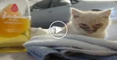 This Lonely Kitty Was Found Desperately Crying In the Snow. Heartbreaking Rescue Story