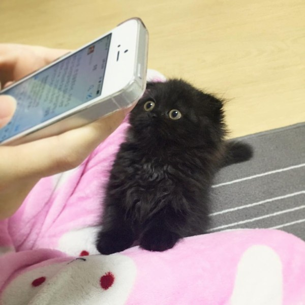 black-kitty-4