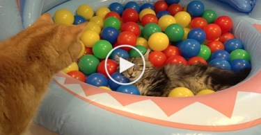 Colorful Balls Are the best Toys For Kittens. Must Watch!