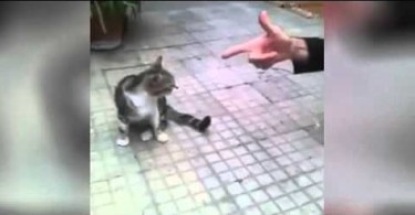 This Cute Cat Is The Best Actor Ever! You Must See Her!