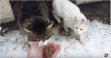 This Man Gave A Treat To a Stray Cat.. He Couldn`t Even Imagine The Cat`s Reaction