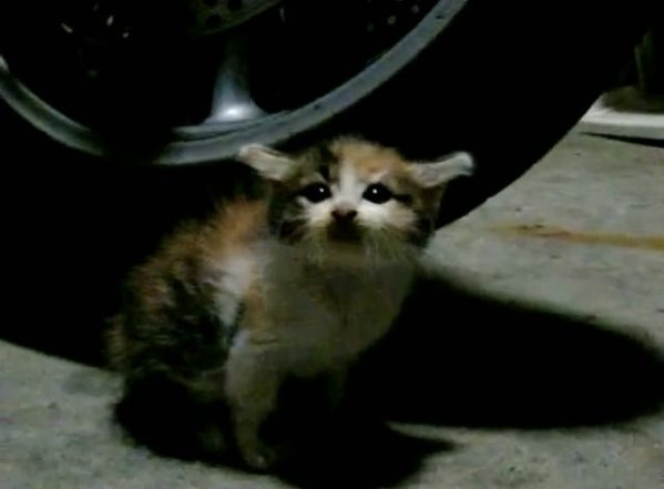 Stray Kitty Feels Loved for the First Time
