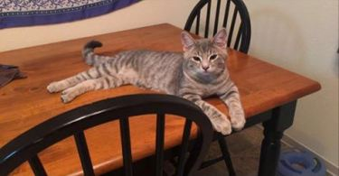 Kitty Entered Into Woman's Home Claiming This House Her New Home