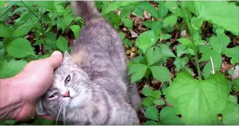 What This Man Found In The Woods Is Really Amazing - A Lost Cat Is Now Rescued